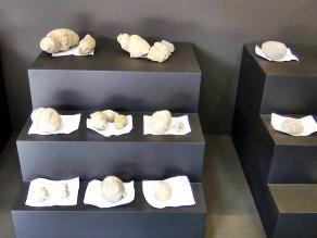 Lambayeque: Este jueves se inaugurará exposición palentológica