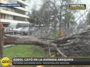 Árbol cayó sobre auto en la avenida Arequipa en San Isidro