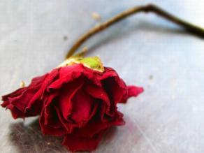 Feminicidio: asesinatos en nombre de amores mal entendidos