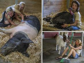 California: Nuevo hogar para animales maltratados