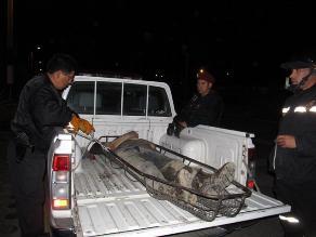 Laredo: Hombre muere atropellado por camión cuando iba en bicicleta