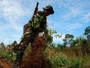Perú lidera la producción mundial de coca, a pesar de reducir sus cultivos