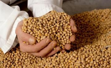Productores argentinos retienen soja para protegerse de inflación