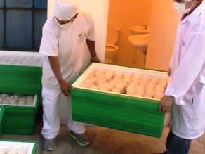 Huancayo: Mala manipulación de alimentos en proveedor de Qali Warma