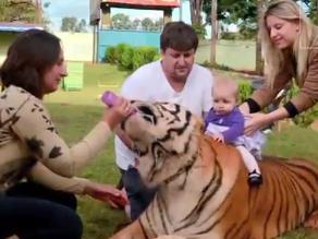 Una familia brasileña tiene como mascotas a nueve tigres