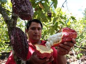 Devida: Más de 78,000 familias se dedican a los cultivos alternativos