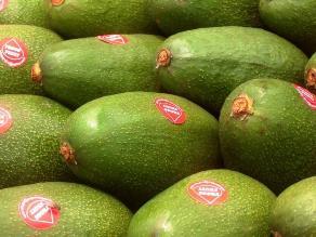 Maximixe: Producción peruana de paltas crecerá 15,6% en 2014