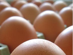 El huevo no representa peligro para las personas con colesterol elevado