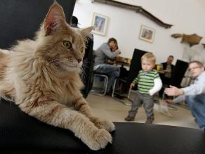 ¿Qué efectos pueden provocar los gatos en nuestra salud?