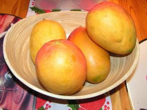 Cuatro mil toneladas de mango orgánico producirá Lambayeque