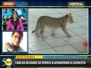 Carlos Álvarez apadrinará a leoncita ´Evita´