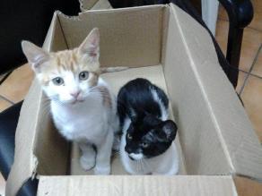 Gatitos abandonados en caja buscan familias amorosas