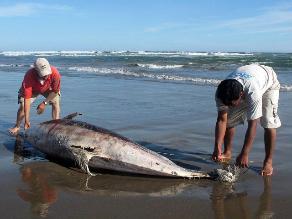 Captura de delfines es un delito ambiental que debe ser castigado, afirman