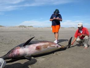 Piden a fiscalías investigar caza de delfines y tiburones