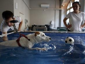 Francia: Mascotas vuelven a caminar en centro de rehabilitación canina