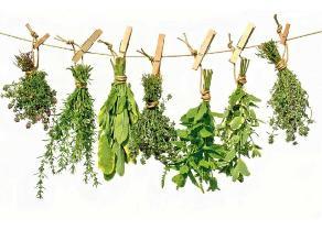 Alertan sobre riesgos de consumir hierbas medicinales