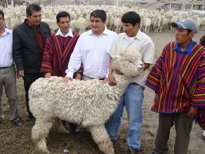 Francia apoyará un proyecto para el hilo de alpaca en Perú