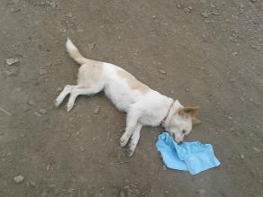 Tacna: Militar mata a perro con su arma de reglamento