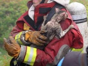 Jesús María: Once gatos con graves quemaduras tras incendio en quinta