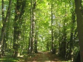 Inventario Nacional Forestal demandará US$ 20 millones