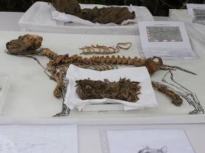 Hallan momias de 137 perros de 1 200 años en Parque de las Leyendas