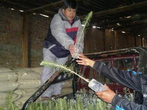 -La Libertad: Arborizan Otuzco durante Semana Forestal