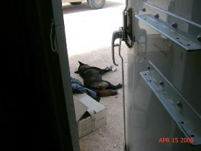 EE.UU.: Protectora de animales mata a sus 31 perros y suicida