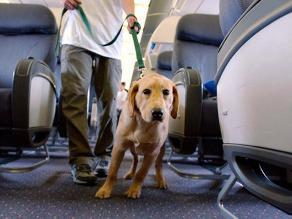 Se niegan a volar por expulsión de avión a ciego y su perro guía