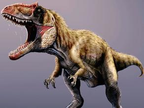 Siats meekrorum, hallan al rival del Tyrannosaurus rex