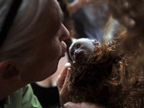 Una amante de los primates visitó a un mono araña y un mono cariblanco