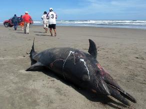 ONG Mundo Azul acusa a viceministro de Pesquería de mentirle al país