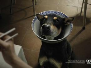 De impacto: la mejor publicidad social que te conmoverá