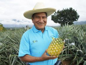 Reinaldo Camarena, impulsor del cultivo de piña Golden en Mazamari