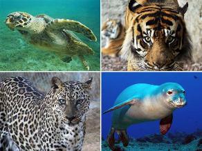 Día de los Derechos de los Animales: Especies en peligro de extinción