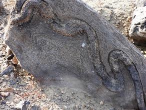 Lambayeque: Piden proteger santuario descubierto más antiguo que Caral