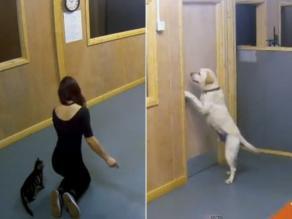 Experimento evidencia conducta de gatos y perros con los humanos
