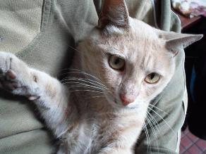 Datan la domesticación de los gatos hace 5.300 años en China