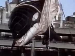 Documental sobre la orca Tilikum deja sin artistas festival de SeaWorld