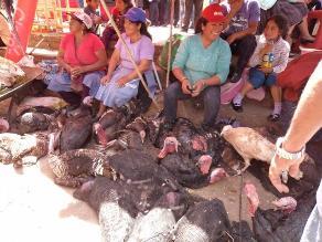 Costo del pavo se incrementa en Cajamarca