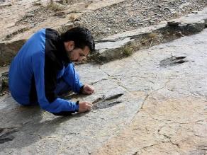 España: Identifican la huella de un nuevo dinosaurio carnívoro