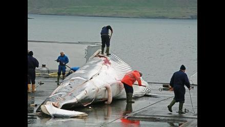 ONG denuncia una matanza de ballenas en zona protegida de Antártida