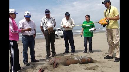 Chiclayo: se investiga las causas de muerte de especies marinas