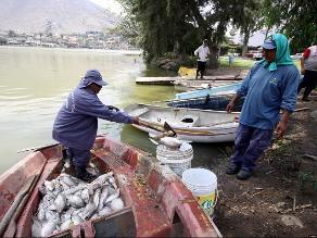 Fotos: retiran peces muertos de La Laguna en La Molina