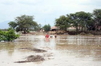 Aparecen numerosos zancudos en Bagua luego de tres días de lluvias