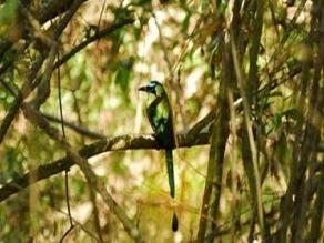 Chiclayo: elaborarán proyecto para recuperación del bosque de Moyán