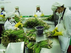 Agroexportaciones no tradicionales crecieron en el 2013