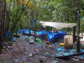 Loreto: policías destruyeron 10 mil kilos de hoja de coca