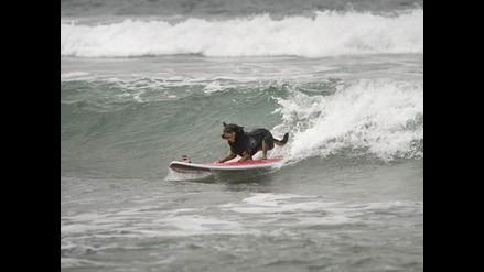 Mascotas están prohibidas en playas o piscinas públicas, advierte Minsa