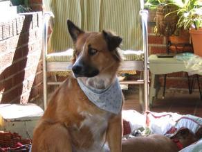 Los cuidados que debemos tener para no exponer a las mascotas al sol