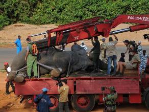 Rescatan elefante herido por conflictos con agricultores en África